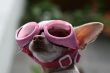 Dog_pink_goggles